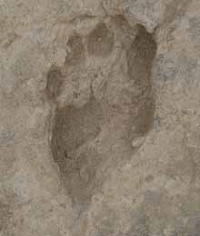 footprint-kenya